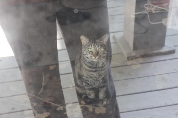 Bibi is my tabby cat