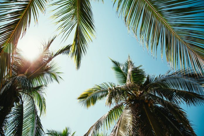 Palm Trees in The Comoros