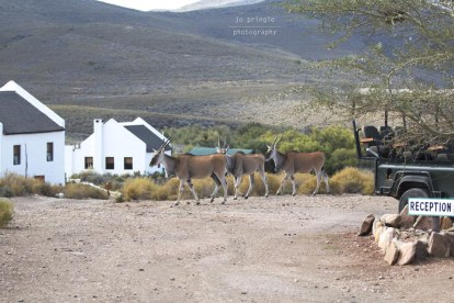 African Game Lodge - 13