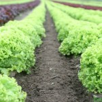 Food-Agriculture