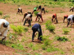 Farming In Nigeria