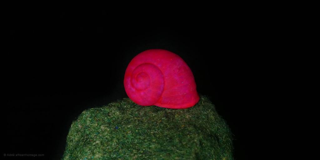 Chameleon snail, sculpture, Addé, detail