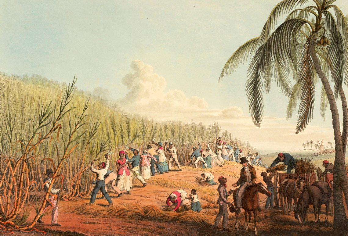 esclaves travaillants dans un champ de cannes à sucre