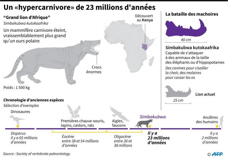 récap des caractéristiques du lion géant par AFP
