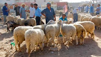 Les appels au  boycott du rituel de l'Aïd Al Idha pour cette année