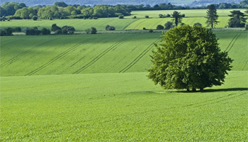 Un nouveau projet environnemental de recyclage des déchets verts pour la production des engrais biologiques sera bientôt réalisé dans la
