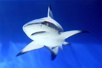 Trois requins ont été aperçus près des côtes barcelonaises mardi matin.