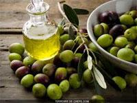 Parmi les 60 mille tonnes d'huile d'olive programmées à l'exportation