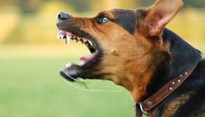 Prés de 321 140 animaux (chiens et chats) ont été vaccinés depuis le mois de juin 2014. Cette initiative s'inscrit dans le cadre de la campagne nationale de vaccination