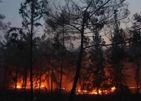 Kef : Un nouvel incendie ravage les forêts Incendie14.jpg?zoom=2