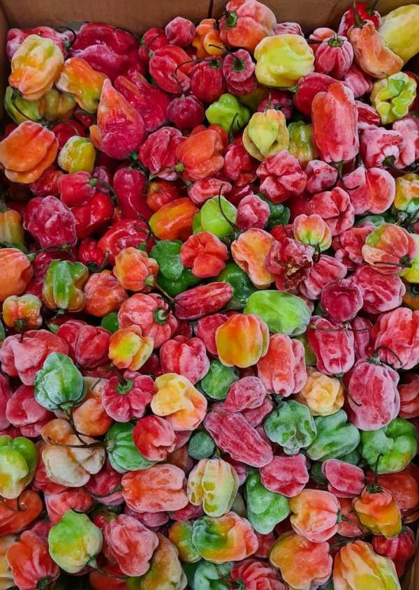 Scotch Bonnet African Fresh Red Pepper (1 kg)