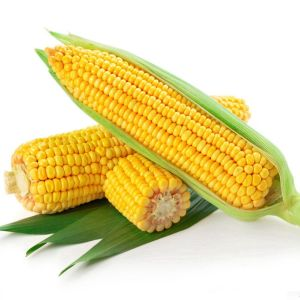 African Corn (2 pieces)