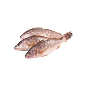 Fresh Croacker Fish 1kg