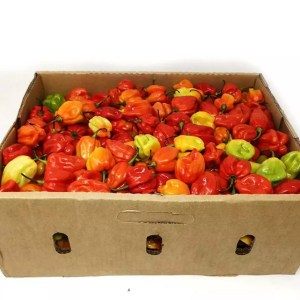 Full Box Fresh Scotch Bonnet Red Pepper