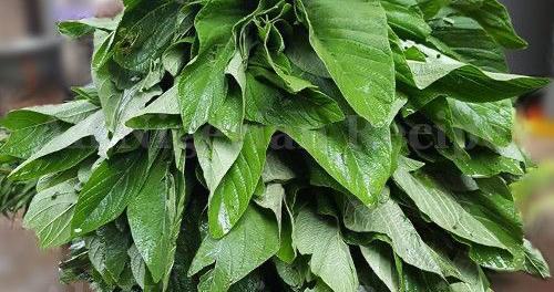 Nigerian Spinach Efo Tete 1 bunch