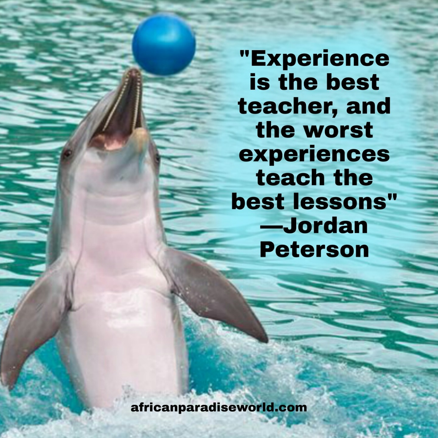Experience is the best teacher quote from Jordan Peterson