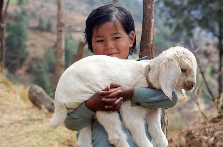 A lamb in a child's hand depicting an example of humility