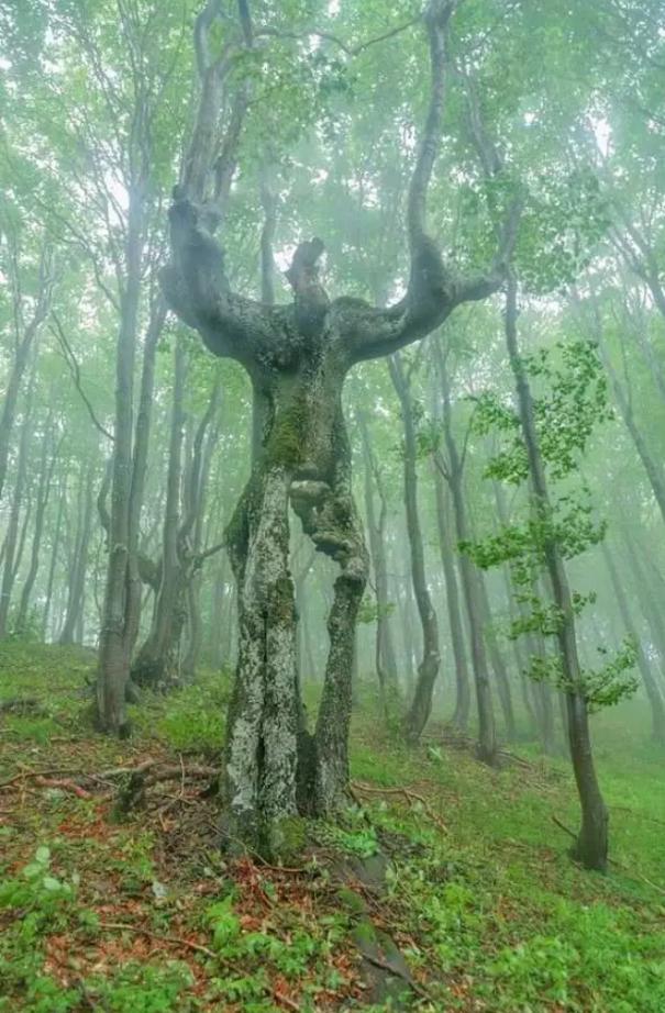 Natural tree beautifully formed like human