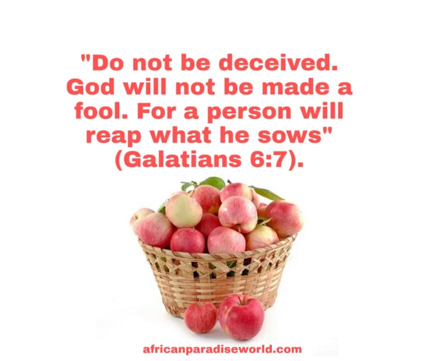 You reap what you sow Bible verse