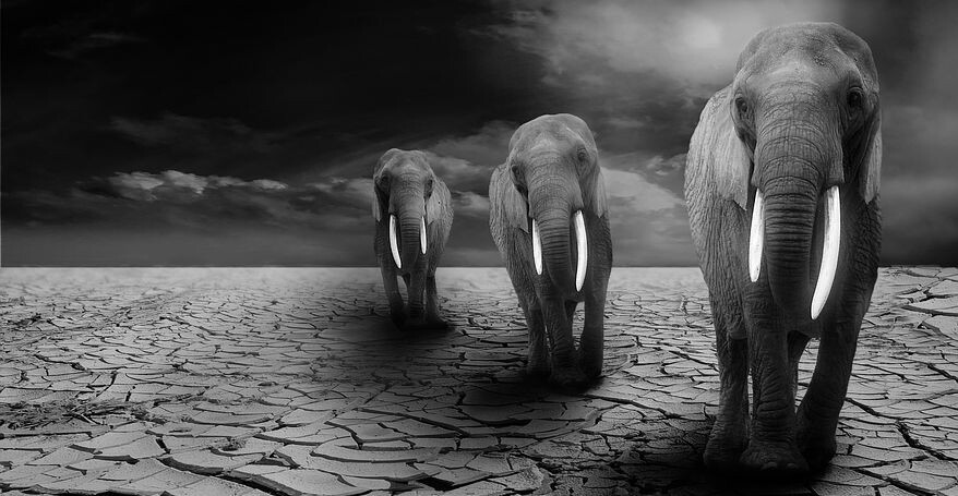 3 elephants walking on a dried land looking for water