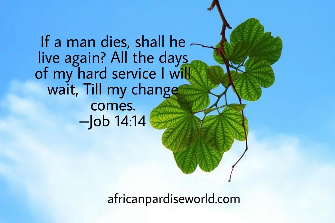 Job 14:14