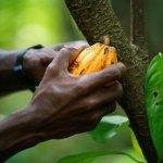 Ghana, wake up! China is exporting Cocoa to Belgium