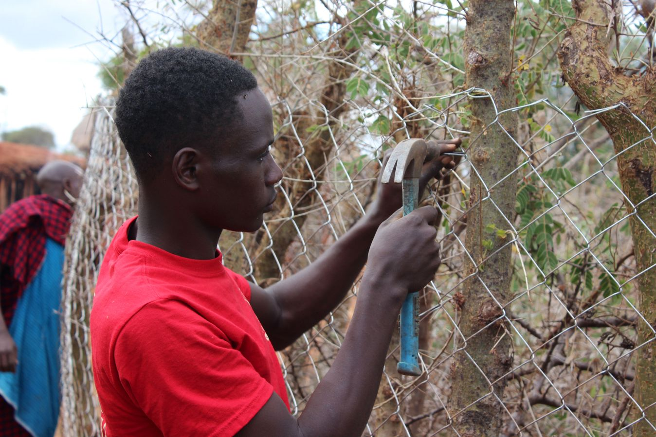Chain-link fencing is secured to the trees of a Living Wall.