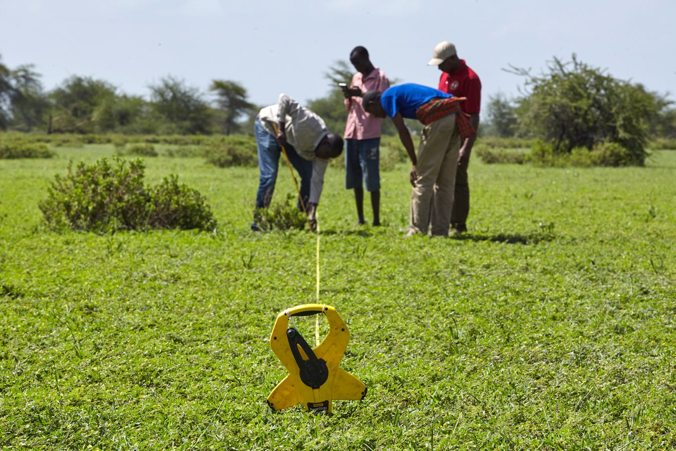 Community rangeland monitors work in a pasture in northern Tanzania