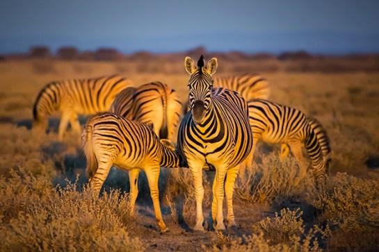 african animals - africa4