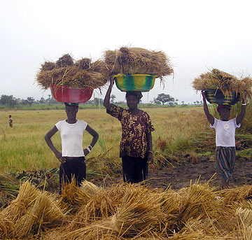 Restoring Sierra Leone's Agriculture Production