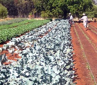 Baraka Farm