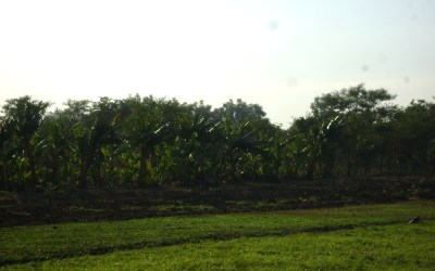 One Dream… From Banana Plantations to Fish Pond… All for the Orphanage