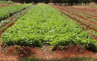 Supporting Farmers and Agriculture Programs That Feed Communities