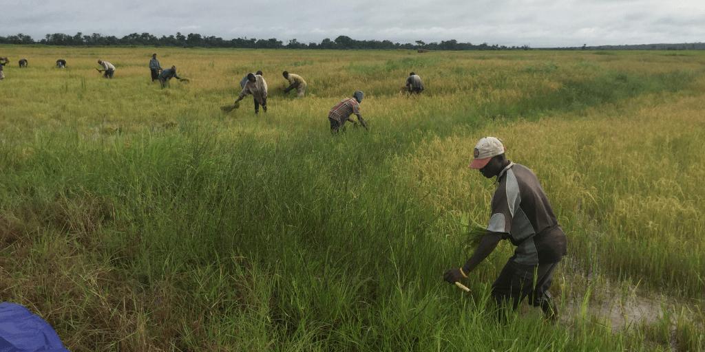 Farmers in Sierra Leone