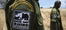 Simple Steps You Can Take to Help End Rhino Poaching