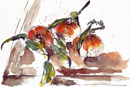 clementine1.jpg