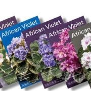 6 African Violet Magazine Covers stacked and tilted