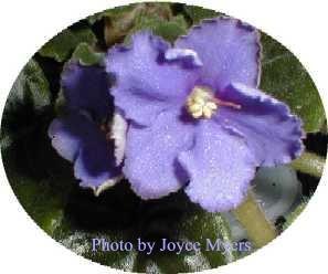 Ultra Violet Moondust
