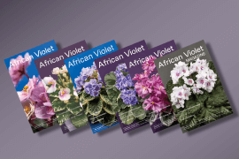 6 African Violet Magazines in a row