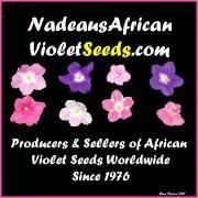 Nadeau's African Violet Seeds