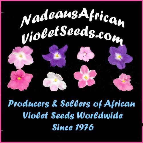 Nadeau African Violet Seeds