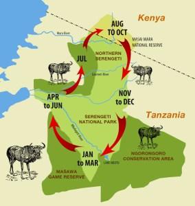 wildebeest-migration-cycle
