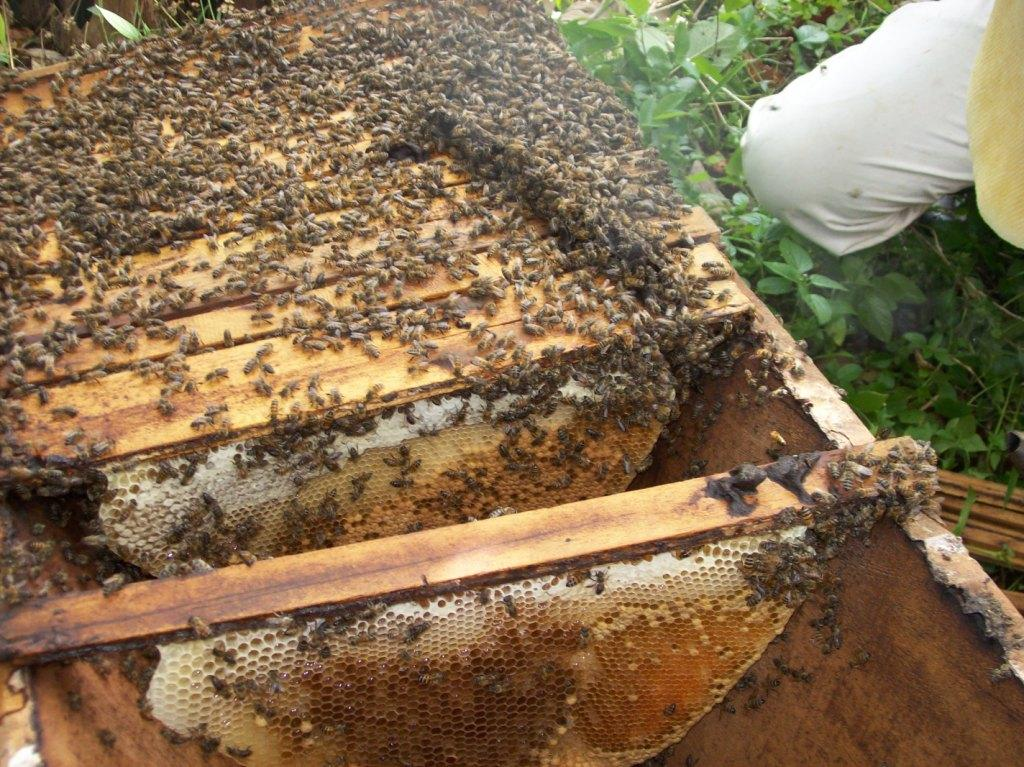 Nigeria: Government Sponsors 2500 Youths In Bee Farming