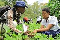 IITA engages young schoolchildren as future agriculture entrepreneurs