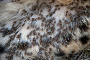 Cheetah Flies and More….