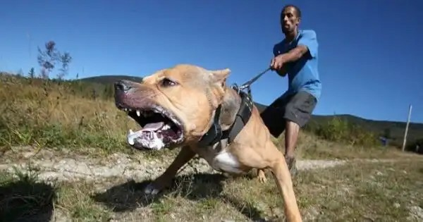 Court sentences dog to death for murder