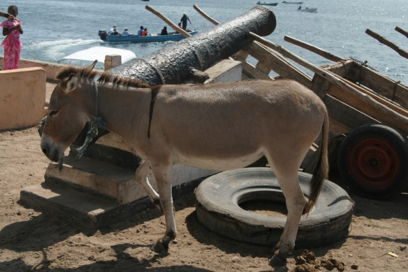 Kenya Lama donkey and cannon on waterfront seawall on harbor