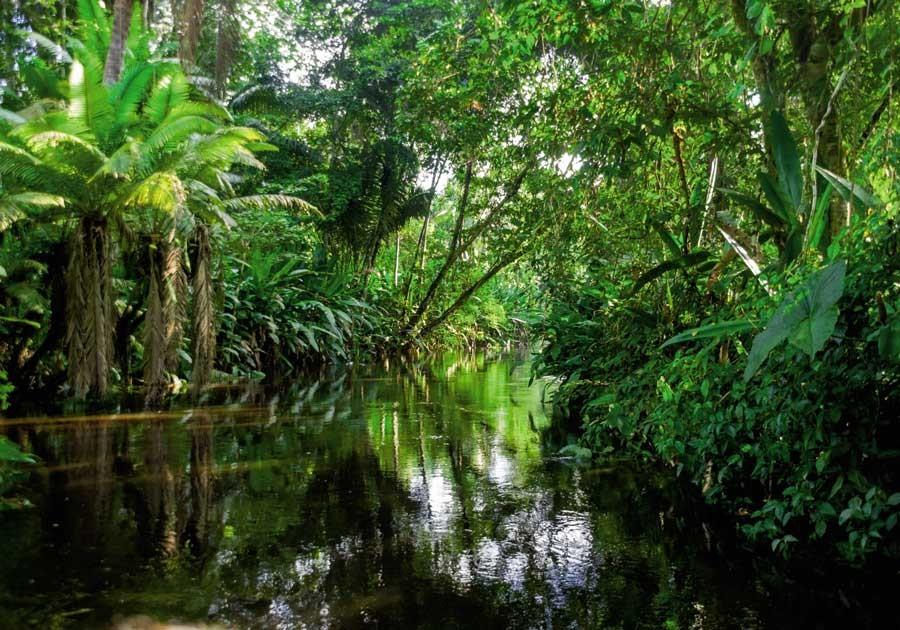 Protection des forts  Le Gabon obtient environ 10