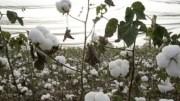 Salon International du Coton et du Textile