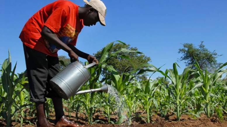 Les ressources naturelles de l'Afrique